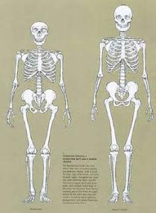who was neanderthal man?, Skeleton